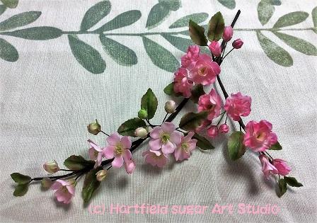 小島さん桜.jpg